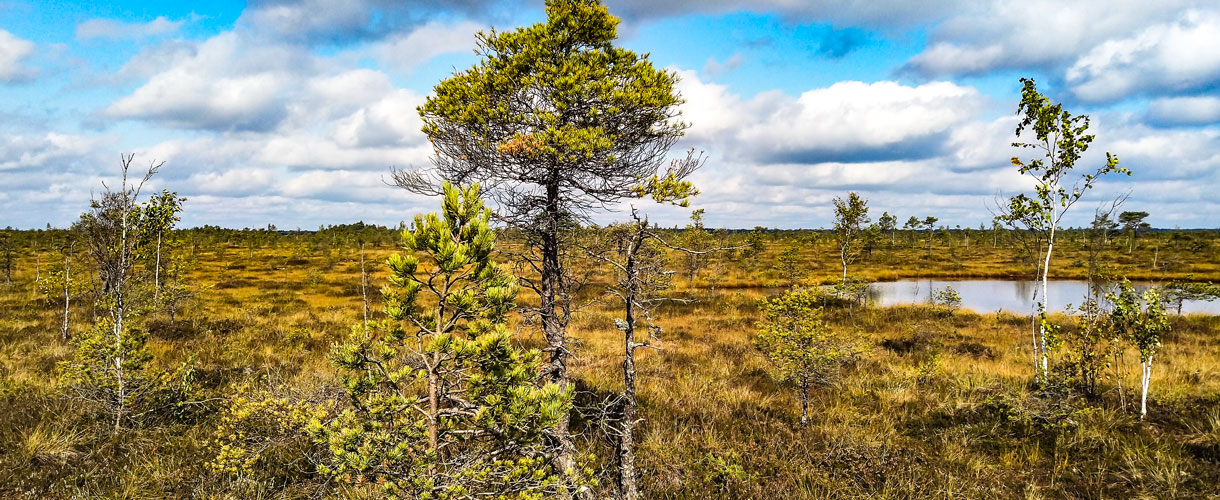 Wycieczka do Estonii: estońska przyroda i Vana Tallinn z Barents.pl