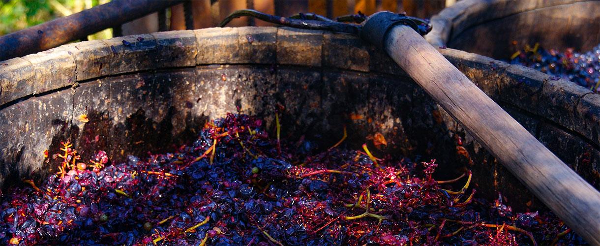Tradycyjne metody wyrobu wina. Kulinarny wyjazd dla koneserów fot. © Roman Stanek, Barents.pl