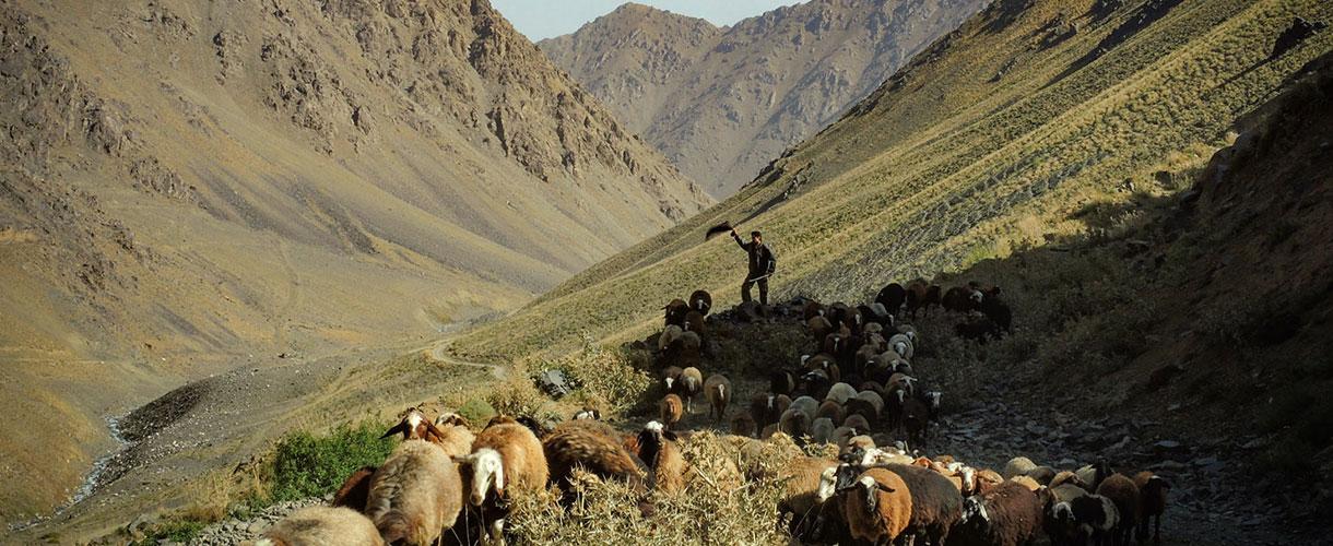 Trekking na najwyższe szczyty Iranu: Demawend + Alam Kuh © Grzegorz Sułek dla Barents.pl