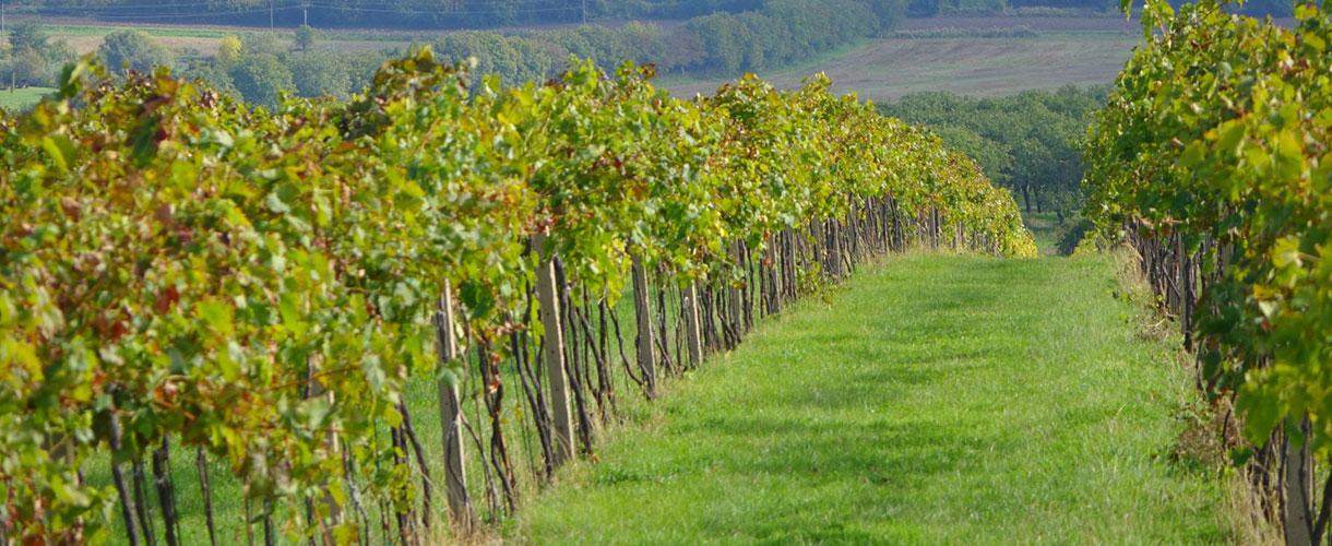 Czechy i Morawy Południowe: weekend w krainie wina. fot. © Filip Hlavinka, Barents.pl