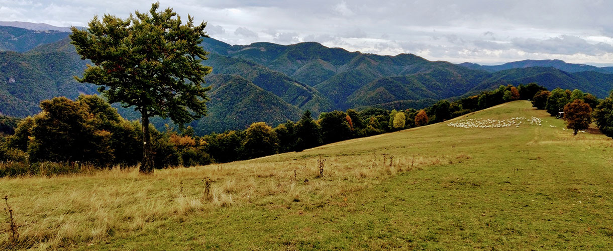 Słowacja: Wielka Fatra. Trekking niedźwiedzim szlakiem. fot. © Martin Gendiak, Barents.pl
