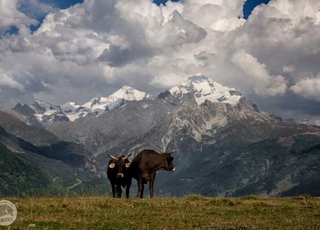 Gruzja: Trekking w Swanetii © fot. Lidka Wiśniewska z Barents.pl
