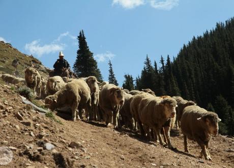 Tysiące baranów, zwanych baraszkami. Kirgistan w relacji Oli i Piotrka, pilotów Barents.pl