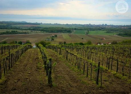 Widok na Balaton przez winnice. Tagyon. Rowerem nad Balatonem. Kwiecień 2014 fot. © Roman Stanek, Barents.pl