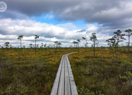 Wycieczka do Estonii: estońska przyroda i Vana Tallinn fot. © Mateusz Kuszela, Barents.pl