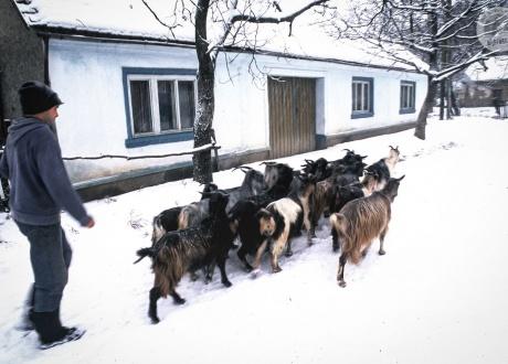 Czy w lecie czy w zimie, na spacer iść trzeba :-) © Ivo Dokoupil, Barents.pl