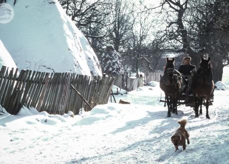 W zimie czasem innego transportu w Banacie nie ma :-) Zimowe pejzaże rumuńskiego Banatu. © Ivo Dokoupil, Barents.pl