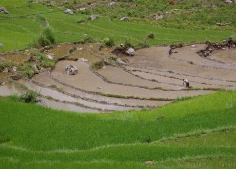 Pola ryżowe. Rowerem przez Himalaje: Bhutan. fot. @ Marie-O'Malley