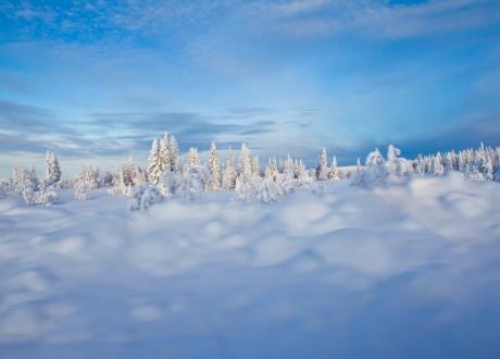 Szwecja: tygodniowy obóz na biegówkach w Dolinie Ljungdalen fot. © Mikko Nikkinen