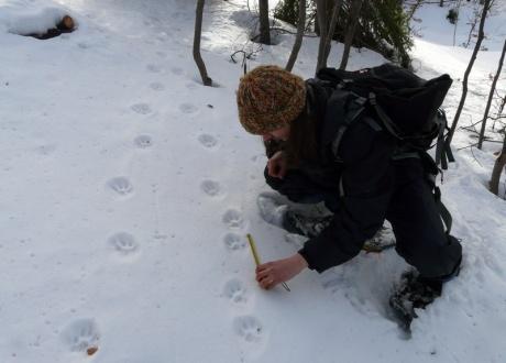 Śladami rysia i wilka w Beskidzie Czesko-Słowackim